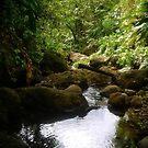 Grenadian Jungle Creek by globeboater