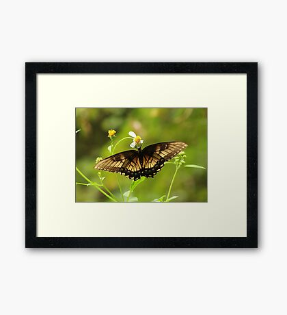Brown and Yellow Butterfly on Flower Framed Print