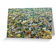 Frost of fallen leaves Greeting Card