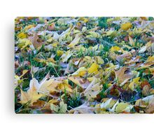 Frost on fallen leaves - closeup Canvas Print