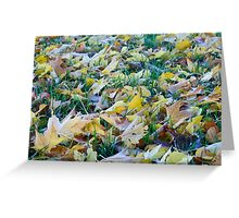 Frost on fallen leaves - closeup Greeting Card