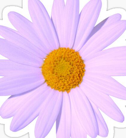 Purple Daisy Sticker