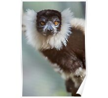 Lovely Lemur Poster