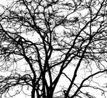 Tree's Silhouette Sticker