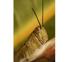 Grasshopper Close Up Photographic Print