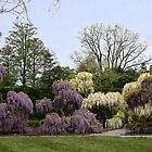 The Wisteria Garden at Longwood by SummerJade
