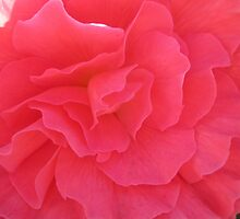 PETALS by Colleen2012