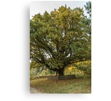 Oldest oaks in Lithuania Canvas Print