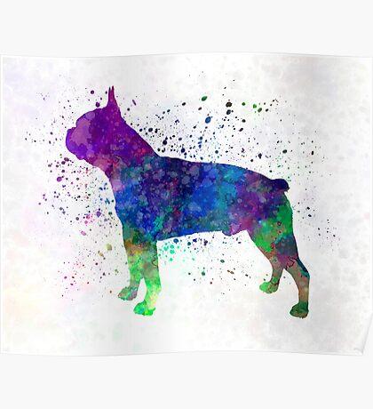 Boston Terrier 02 in watercolor Poster