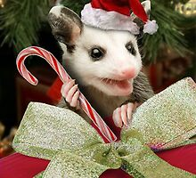 Christmas Opossum  by jkartlife