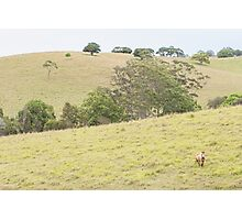Country Side Photographic Print