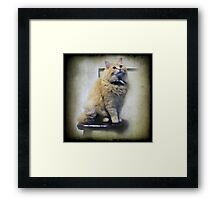 Junper sits on the Kitchen stool Framed Print