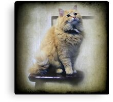 Junper sits on the Kitchen stool Canvas Print