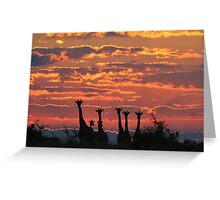 Giraffe - Sunset Sky - African Wildlife and Nature Background Greeting Card