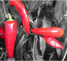 RED HOT CHILLI PEPPERS by Colleen2012