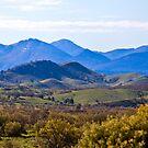 Flinders Ranges - Green by Georgie Sharp