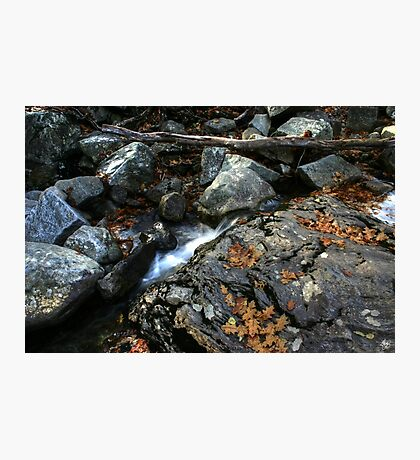 Oak Leaves in a Stream Bed Photographic Print