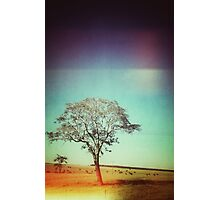 Light Tree Photographic Print