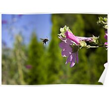 Bee and pink flower Poster