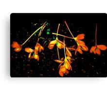 Autumn Crocuses Canvas Print