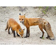 Red fox family Photographic Print