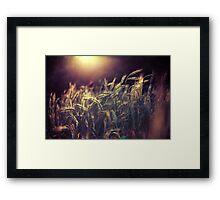 Summer light II Framed Print