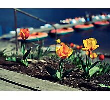 Bright Sunny Days Photographic Print