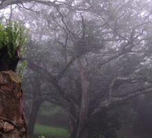 Misty Forest.  Sticker