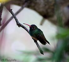 A Still Humming Bird  by Windy Rodriguez