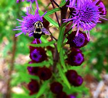 Bumble Bee and Purple Flower by Nalinne Jones