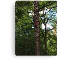 The Hidden Squirrel Canvas Print