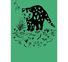 Marsupial Cat - The Spotted Tailed Quoll Photographic Print