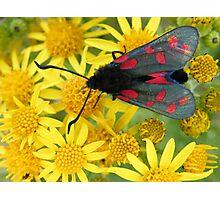 moth on flower Photographic Print