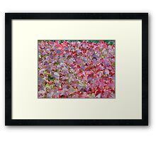 The Autumnal Colours Of Ivy. Framed Print