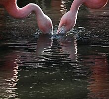 Chilean flamingo  by LydiaBlonde