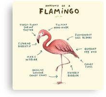 Anatomy of a Flamingo Canvas Print