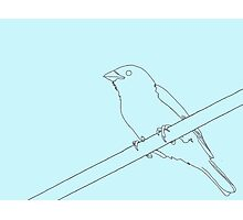 Sparrow on a wire Photographic Print
