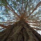 Branches by AleksCanard