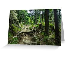 Fairytale Forest - Nature Photography Greeting Card