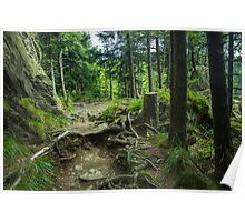 Fairytale Forest - Nature Photography Poster