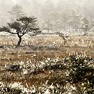 8.9.2014: Pine Tree, September Morning by Petri Volanen