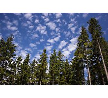 Trees High up to the Sky - Nature Photography Photographic Print