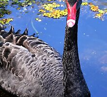 The Black Swan by Ann  Van Breemen