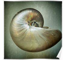 Nautilus L Poster