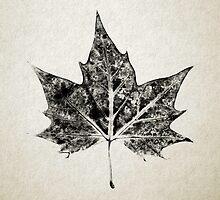 Leaf Print II by Daniel Watts