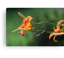 flower in the garden Canvas Print