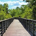 Boardwalk Trail by Cynthia48
