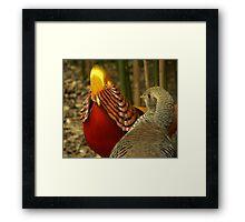 Golden Pheasants Framed Print