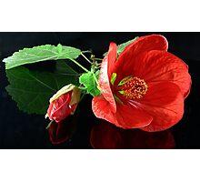 Red Chinese Lantern Photographic Print