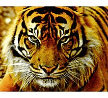 Sumatran Tiger III Photographic Print